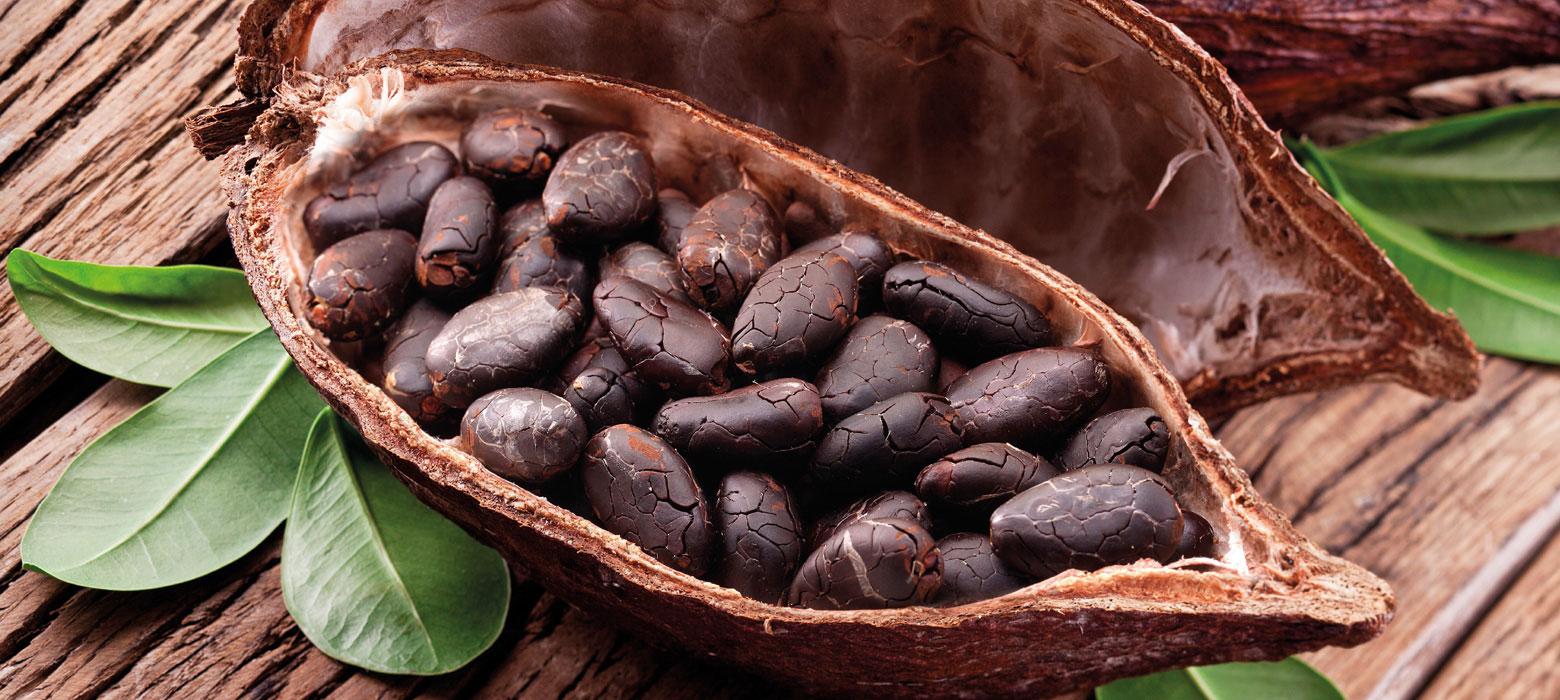 Single bean dark chocolate